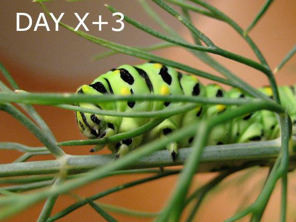 Buddy, day x+3