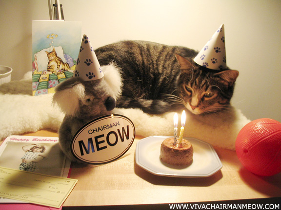 Mag Birthday_cat