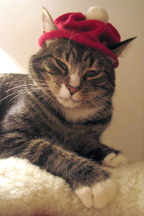 Wendy Chao's Kitty Cat Hat, worn by Chairman Meow
